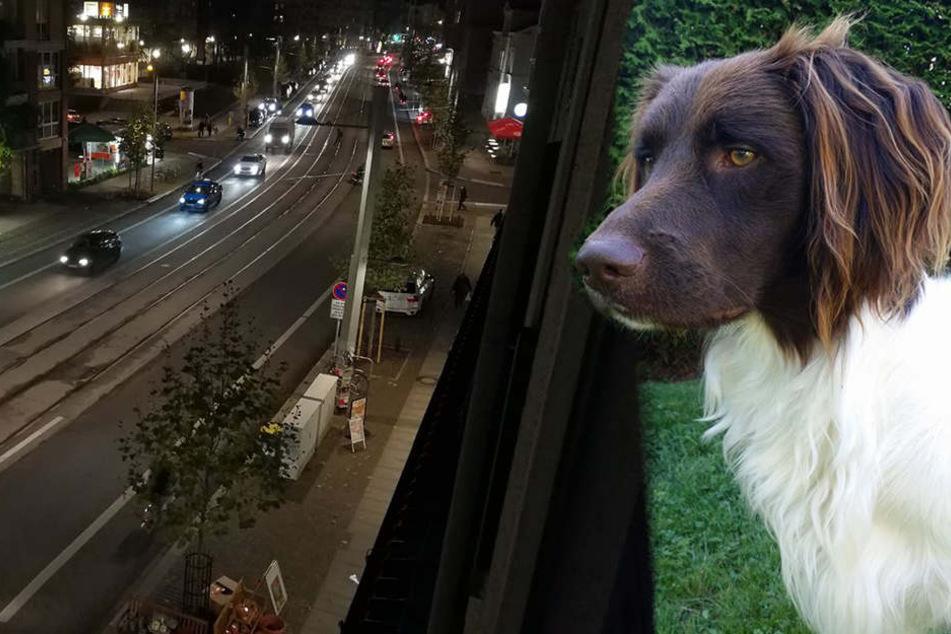 Hund ins Auge geschossen: Hohe Belohnung für Hinweisgeber