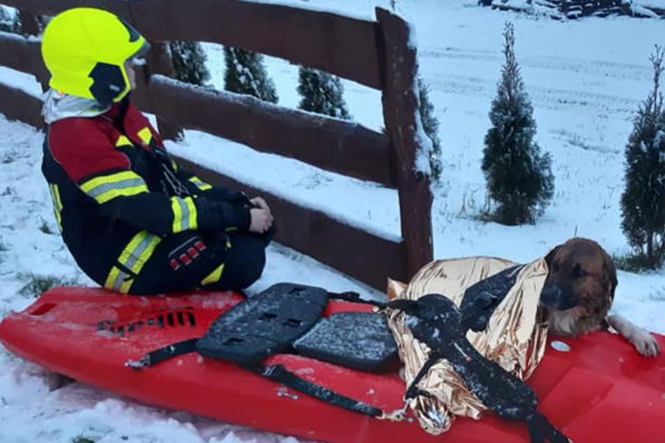 Hund läuft aufs Eis und bricht ein: So dramatisch war seine Rettung!