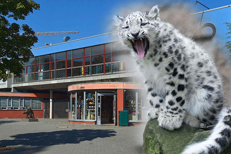 Inzucht? Zoo Dresden wegen tödlicher Leopardenzucht angezeigt