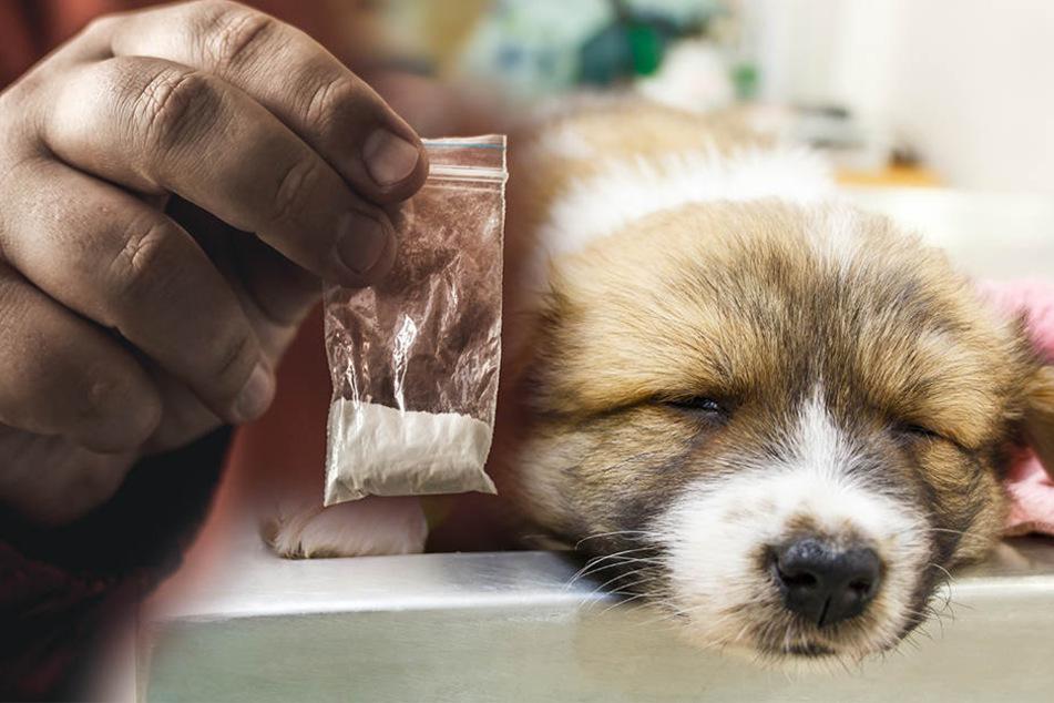 Tierarzt pflanzt Hundewelpen Heroin ein