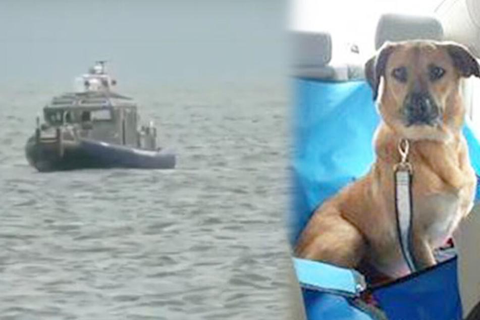Verzweifelter Besitzer sucht zwei Tage seinen Hund! Unglaublich, wo er ihn findet