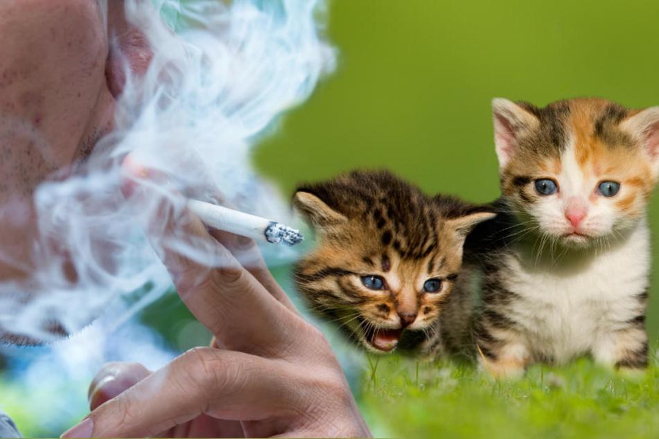 Süße Katzenbabys sterben bei Feuer! War es Absicht?