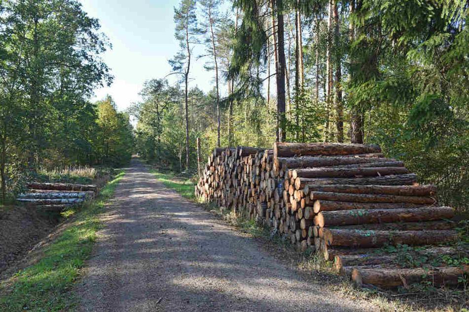 A Tännschen, please! Der Sachsenforst verkauft Wälder