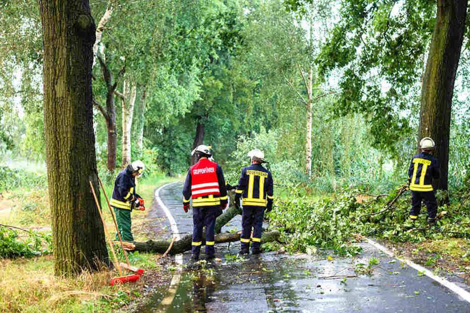 In Döbra bei Bernsdorf musste die Feuerwehr einen umgeknickten Baum von der Straße räumen