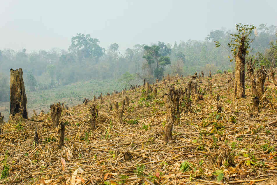 Gerade der Regenwald ist in den letzten Jahren massiv von der Abholzung betroffen. (Symbolbild)