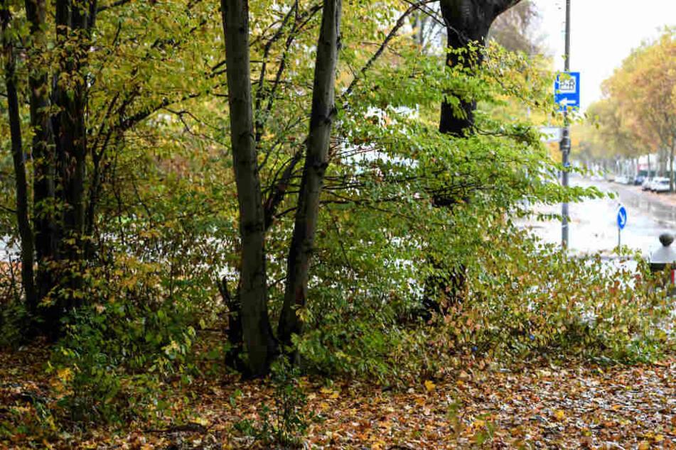 Gruppenvergewaltigung Freiburg: Fünf weitere Zeugen sagen aus