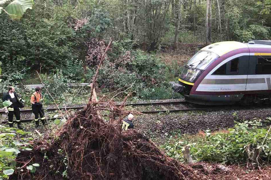 Ein Baum brachte den Zug zum Stehen.