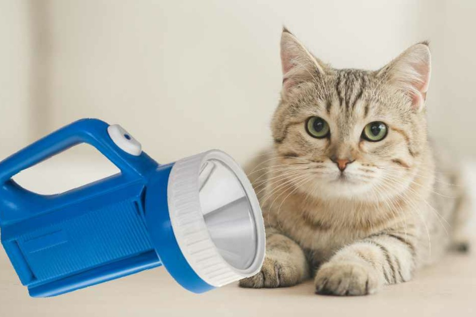 Die Katze hatte an der Campinglampe die SOS-Funktion betätigt.