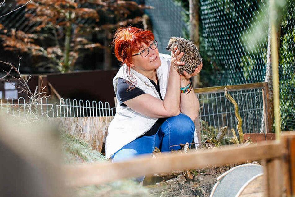 Tierschützerin Cornelia Schicke (56) ist besorgt. Vielen Igeln kann ihre Einrichtung helfen.