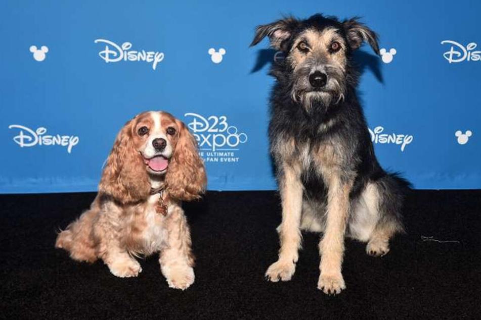 """Er sollte eingeschläfert werden! Jetzt wird dieser Straßenhund zum Star in """"Susi und Strolch"""""""