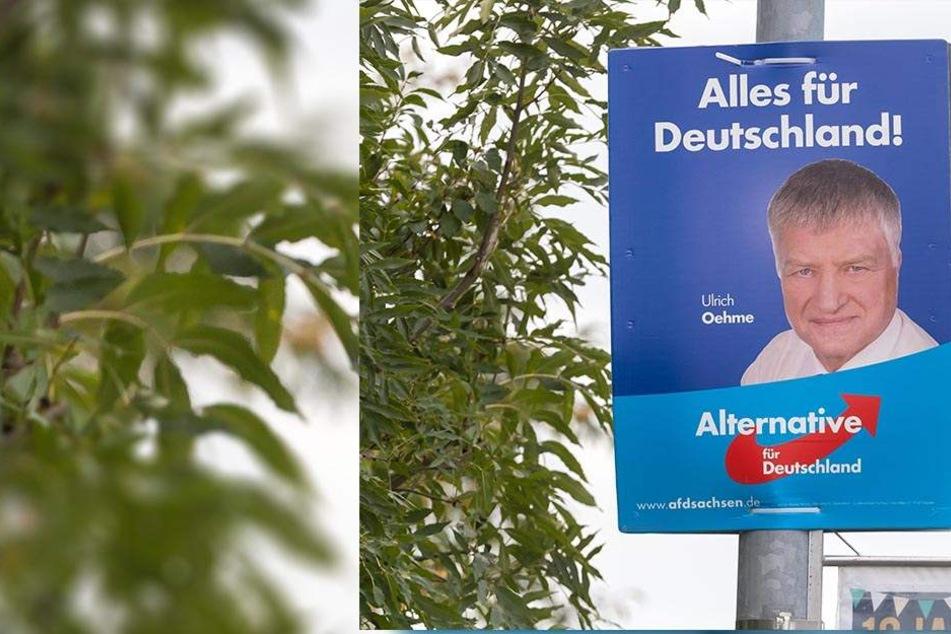 AfD-Kandidat plakatiert mit verbotenem Nazi-Spruch