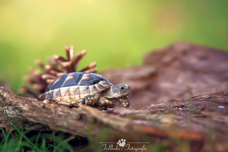 Ob schnell oder langsam wie diese Schildkröte: Anja Schwarz setzt sie alle  ins rechte Licht.