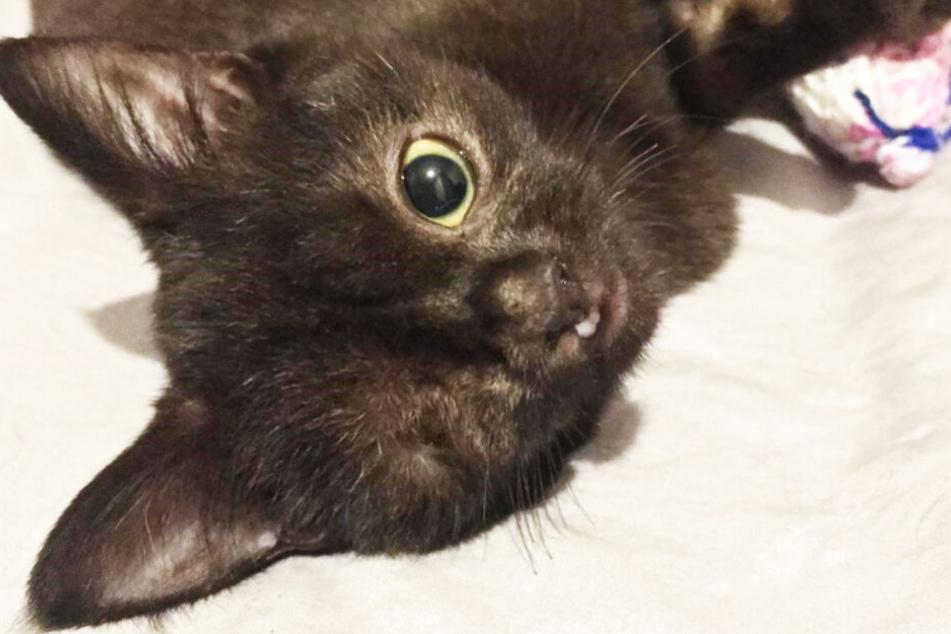 Das Kätzchen Ana hat nur ein Auge.