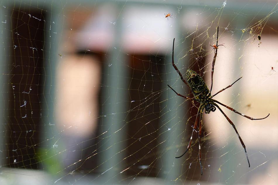 Sie wollte eine Spinnen loswerden und setzte dabei ihre Garage in Brand. (Symbolbild)