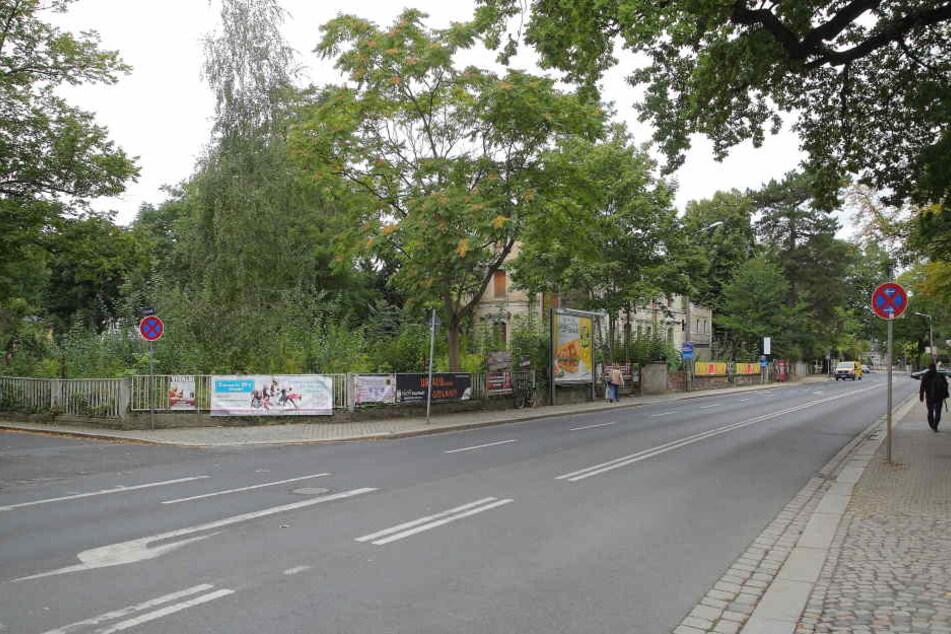 Noch wächst ein wilder Wald auf dem Areal. Die denkmalgeschützte Villa soll erhalten bleiben.