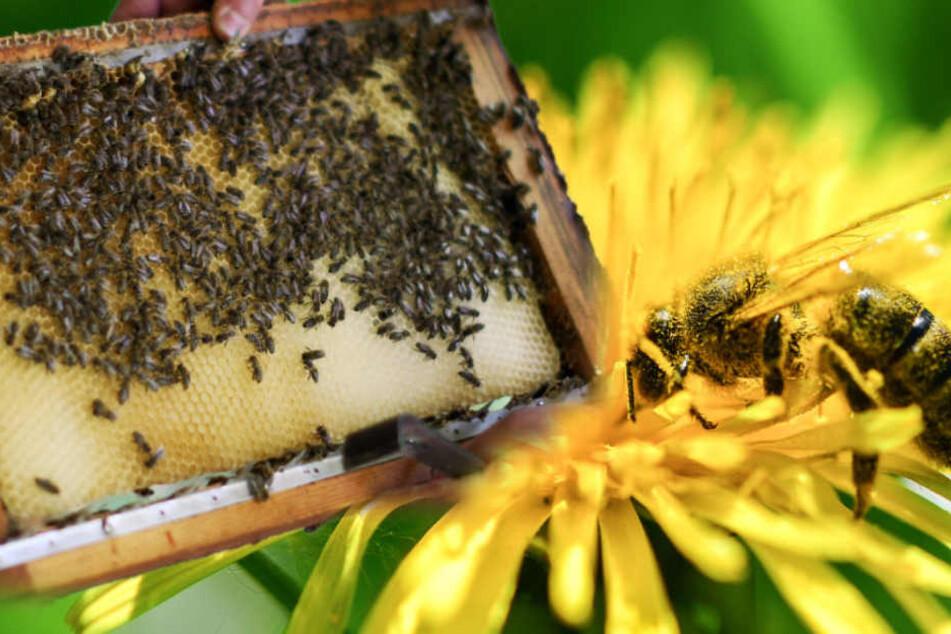 Ohne Biene kein Leben: Zehn Tipps, um den Insekten das Leben einfacher zu machen