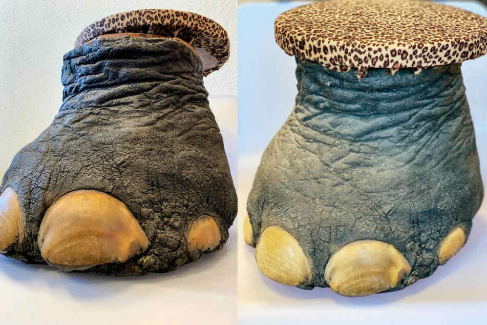 Der Elefantenfuß wurde als Hocker verwendet. Der Zoll beschlagnahmte das Teil.