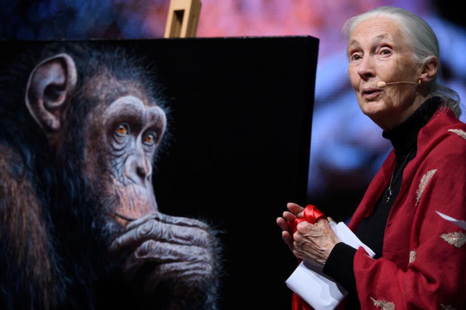 Affen-Forscherin Goodall sieht Hoffnung im Kampf gegen Klimawandel