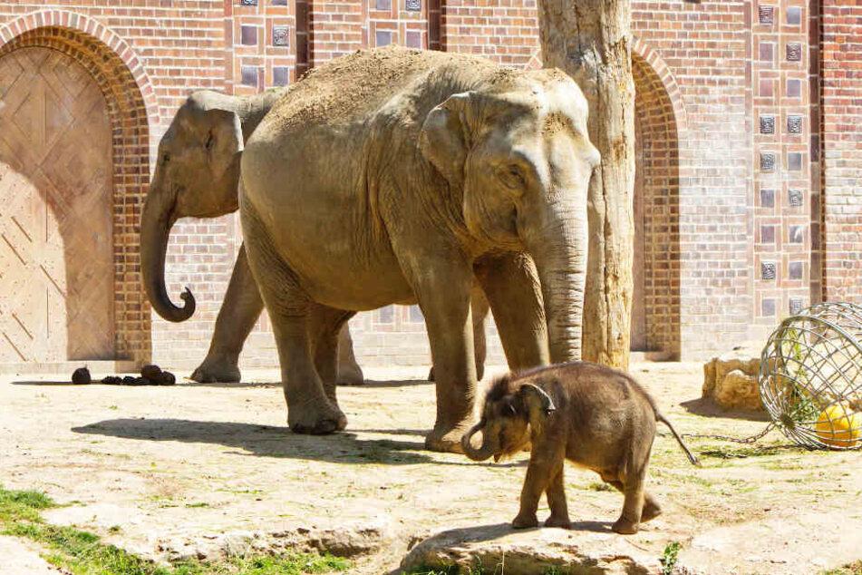 Wie soll der kleine Elefantenbulle aus dem Leipziger Zoo heißen?