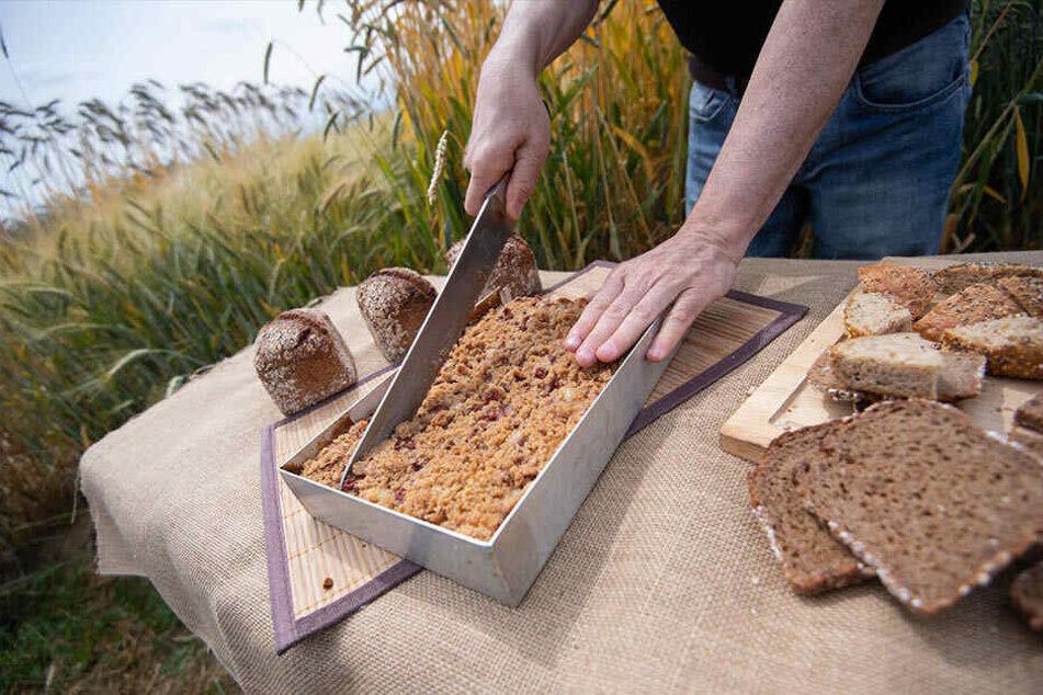 Was hier geerntet wird, landet zu einem Gutteil als Brot auf unseren Tischen.