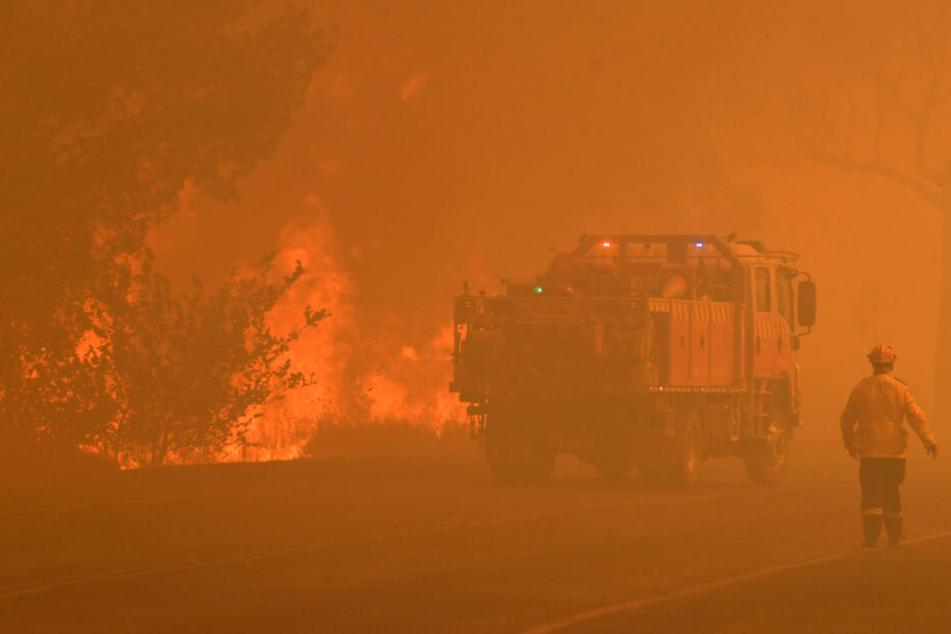 Buschfeuer toben weiter, kein Ende im Kampf gegen die Flammen