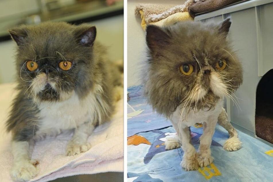Katzen in jämmerlichem Zustand: Wer geht so mit Tieren um?