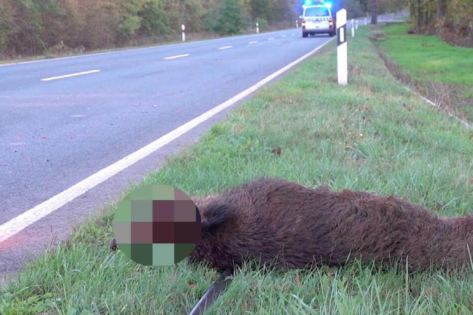 Das Schwein überlebte den Unfall nicht.