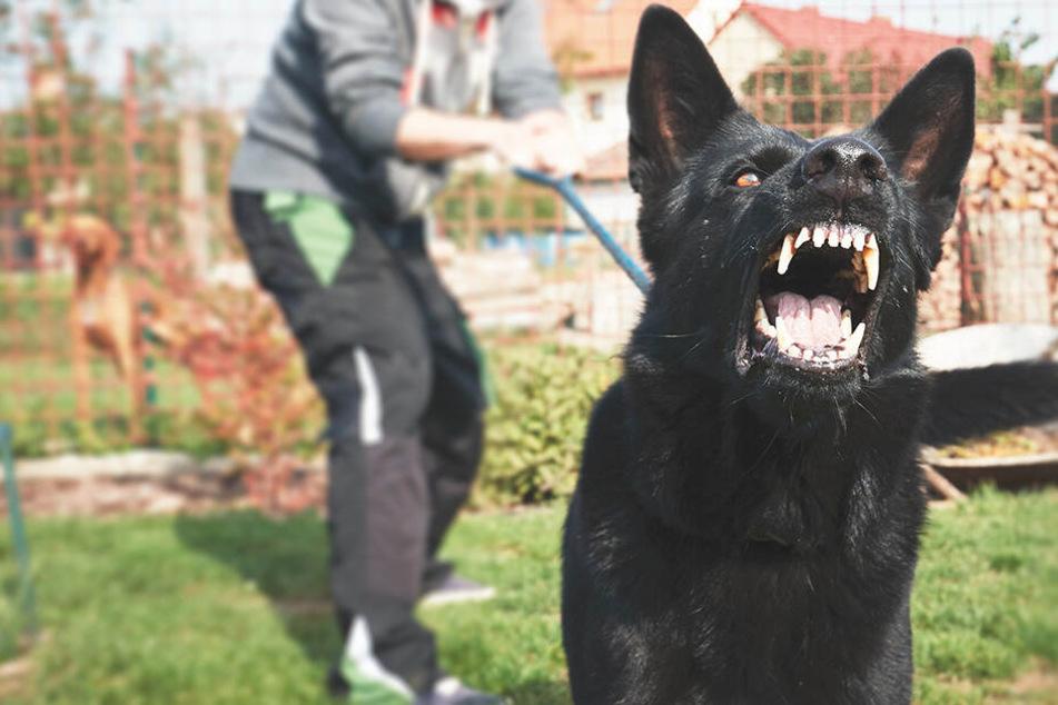 Der Hund biss der Frau ins Gesäß. (Symbolbild)