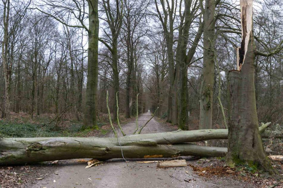 Nach dem Sturm sollten Wälder in NRW wegen möglicher Gefahren nicht betreten werden.