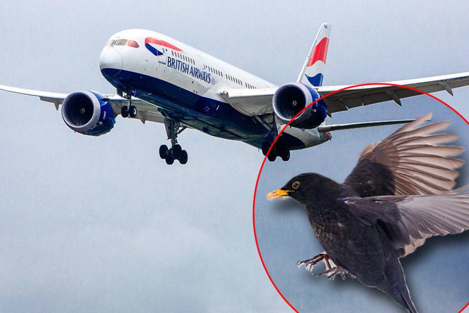 Vogel verirrt sich im Cockpit und keiner erwischt ihn: Flug abgesagt
