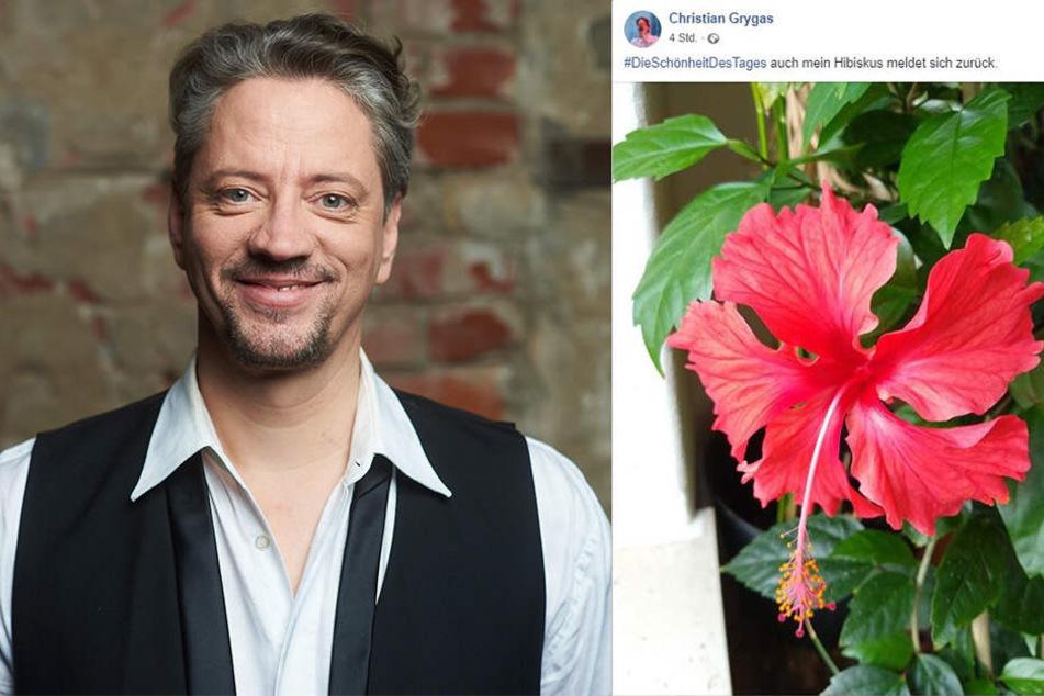 Sänger Christian Grygas (49) hat vor allem blühende Schönheiten wie diesen Hibiskus im Visier.