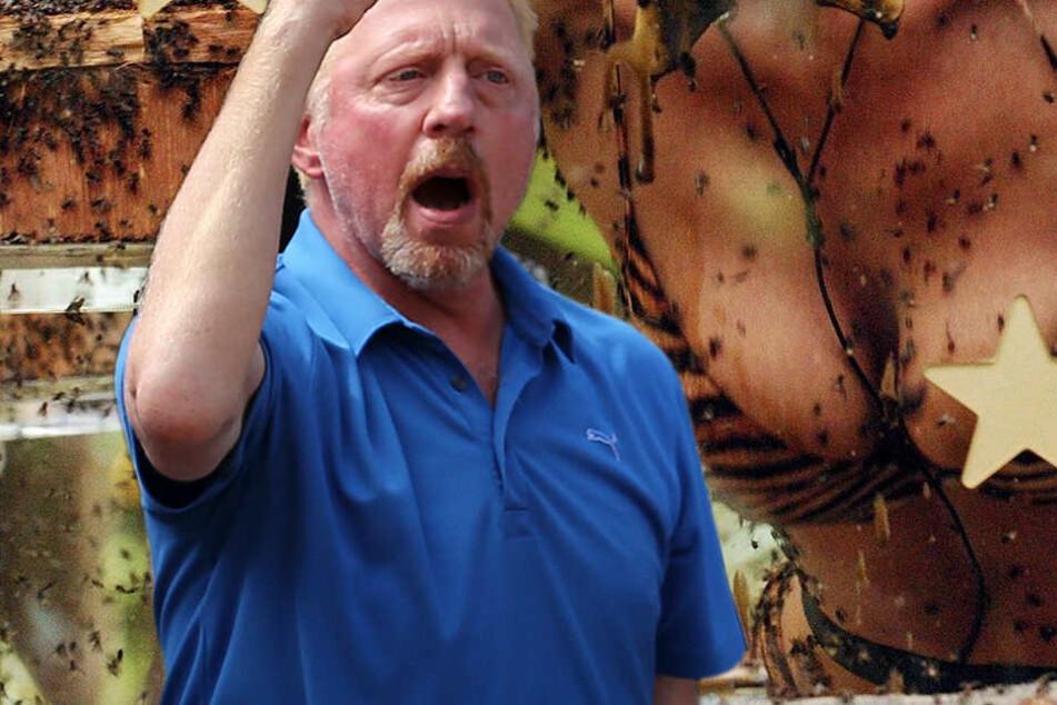 """Tennis-Legende Boris Becker (47) im Dschungelcamp. """"In 100 Jahren nicht""""."""