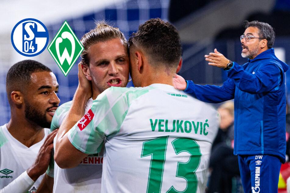 Füllkrug und Werder Bremen stürzen Schalke 04 und Wagner tiefer in die Krise!