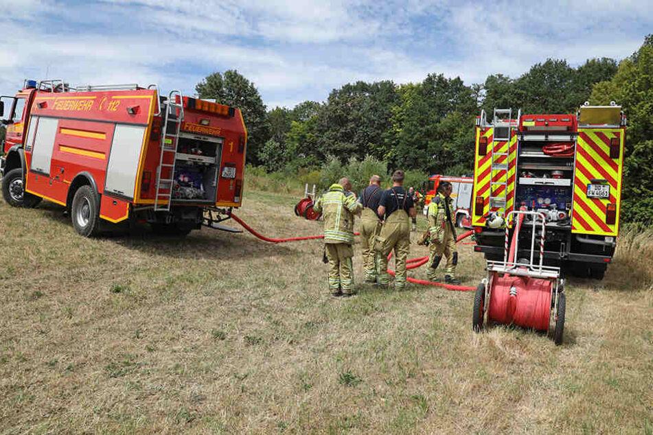 Kameraden löschten ein Feuer in einen Waldstück am Zschonergrund neben einer Grillstelle.