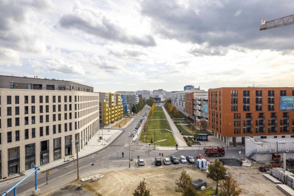 Viel zu viele Flächen in Dresden werden versiegelt, es fehlt am Bäumen - sagt der aktuelle Umweltbericht der Stadt.