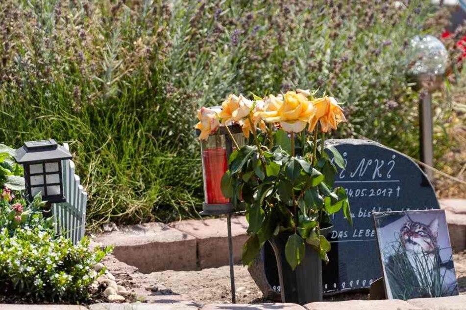 """Katze """"Minki"""" war 2017 auf dem Tierfriedhof bestattet worden."""