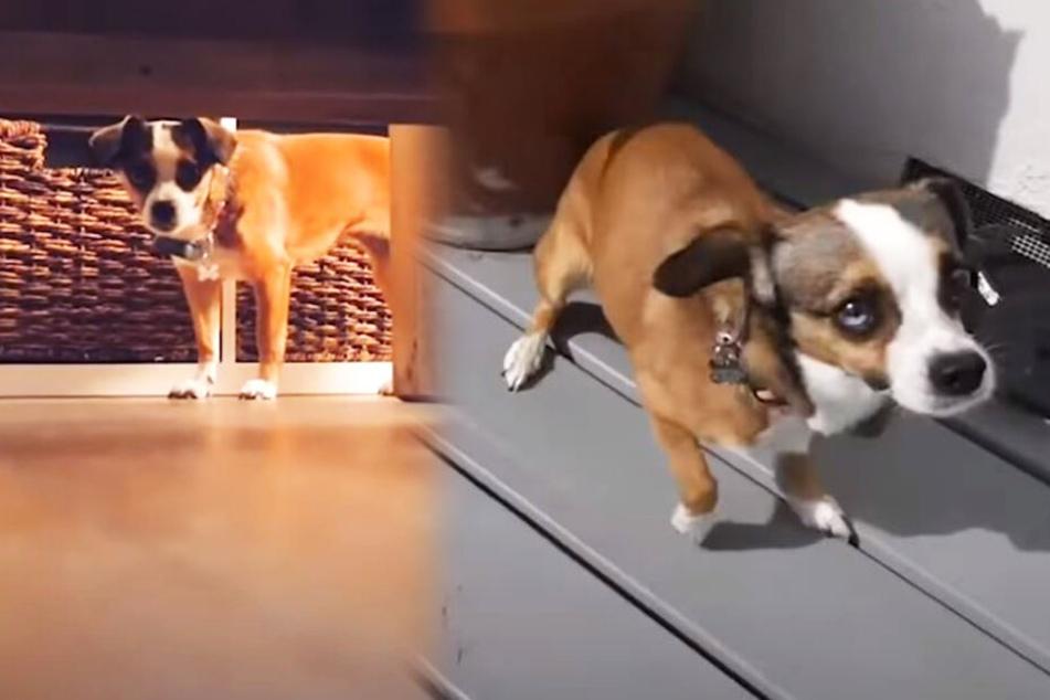 Hund zittert monatelang, durch diese Tricks verlor er seine Angst