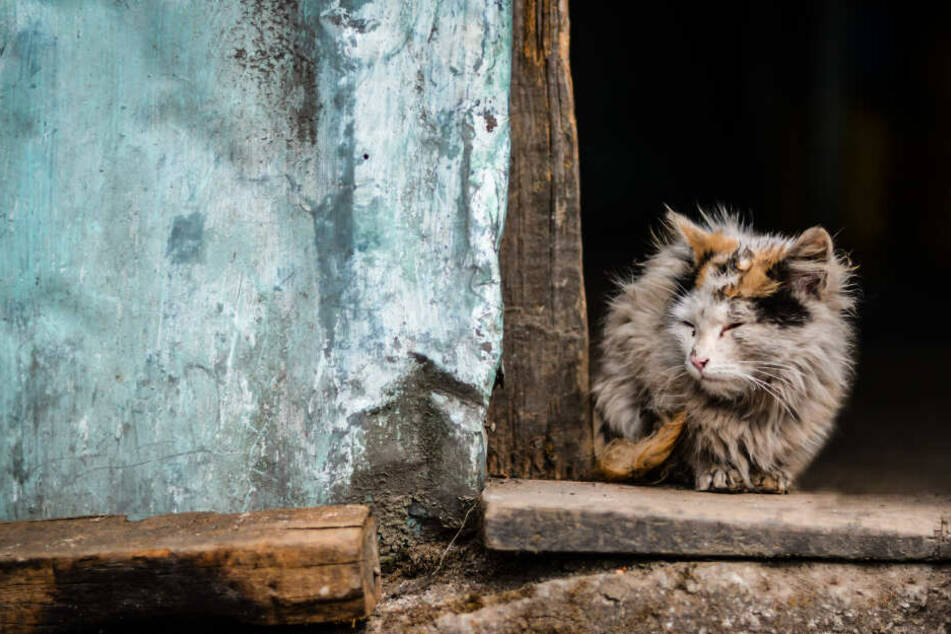 Kranke oder geschwächte Tiere sind auf Hilfe angewiesen.