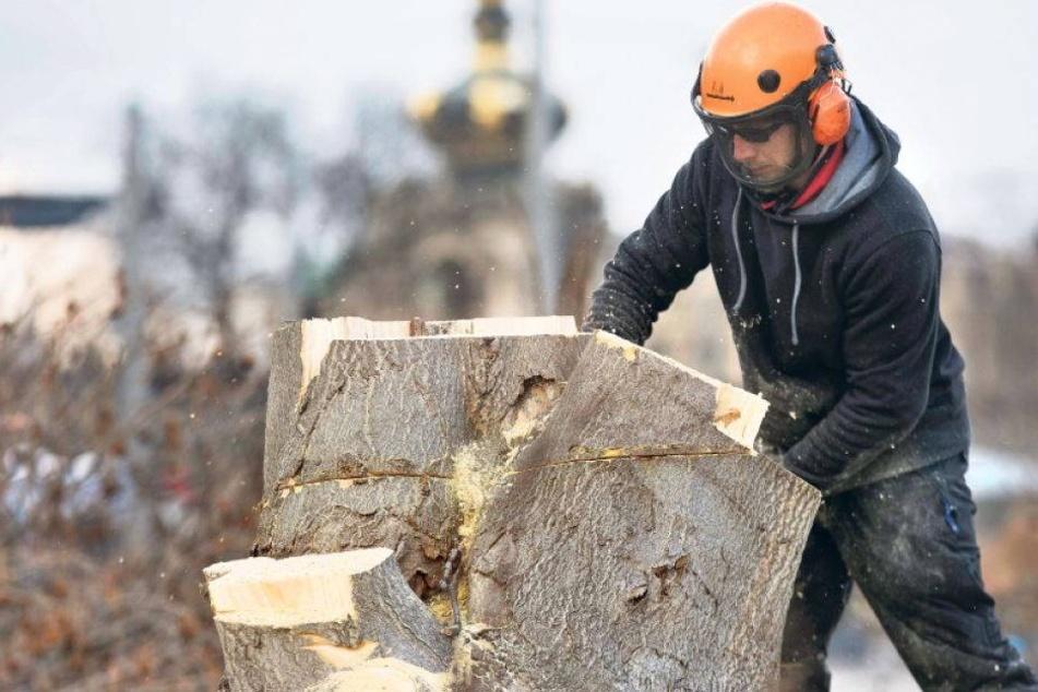 Viel zu wenig grün: In Dresden fehlen 25.000 Bäume