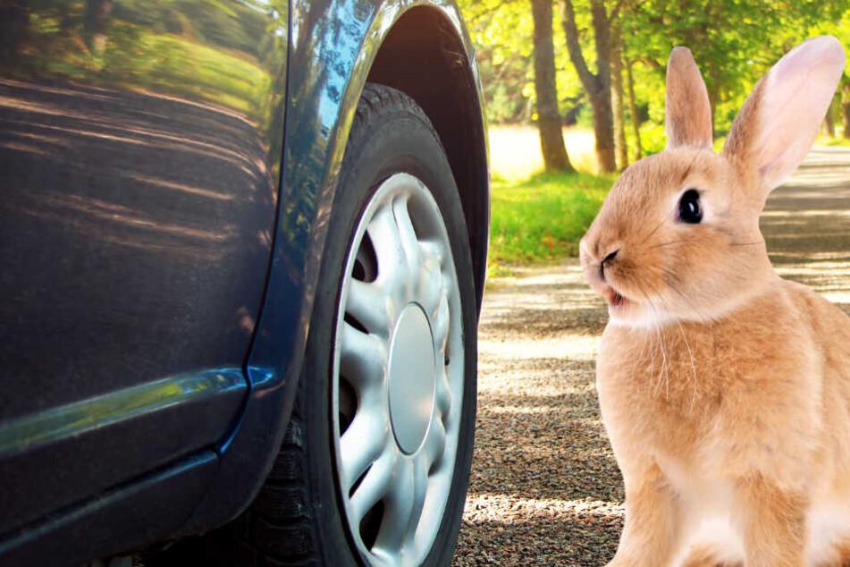 Autofahrerin rammt Hasen und verliert so ihren Führerschein