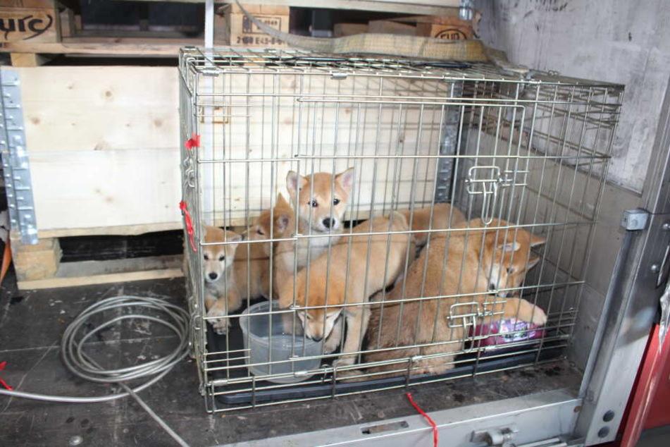 Die insgesamt sieben Welpen wurden in einer winzigen Transport-Box festgehalten.