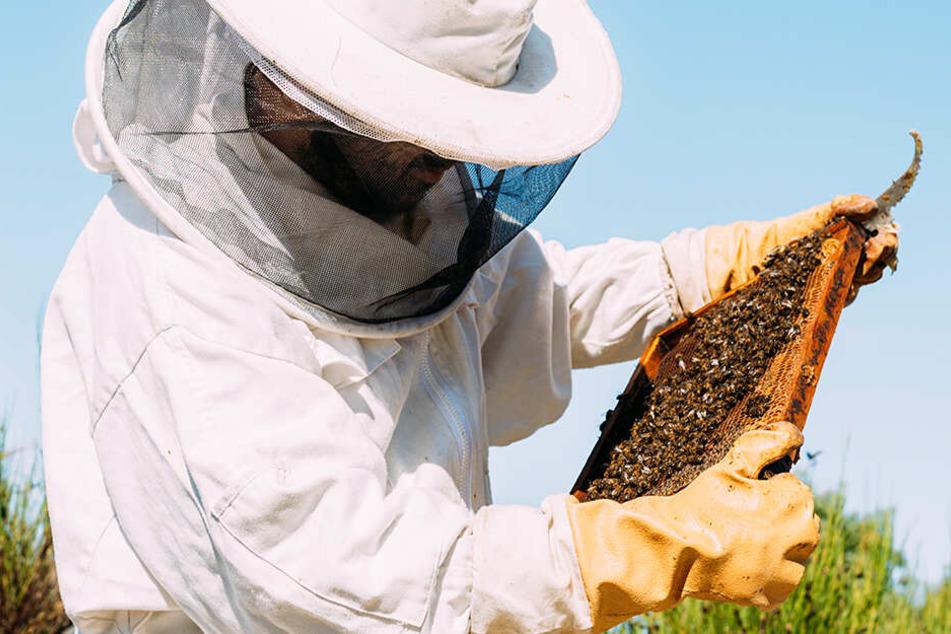 Mysteriöses Massensterben! Verkrüppelte Bienen durch Pestizide?