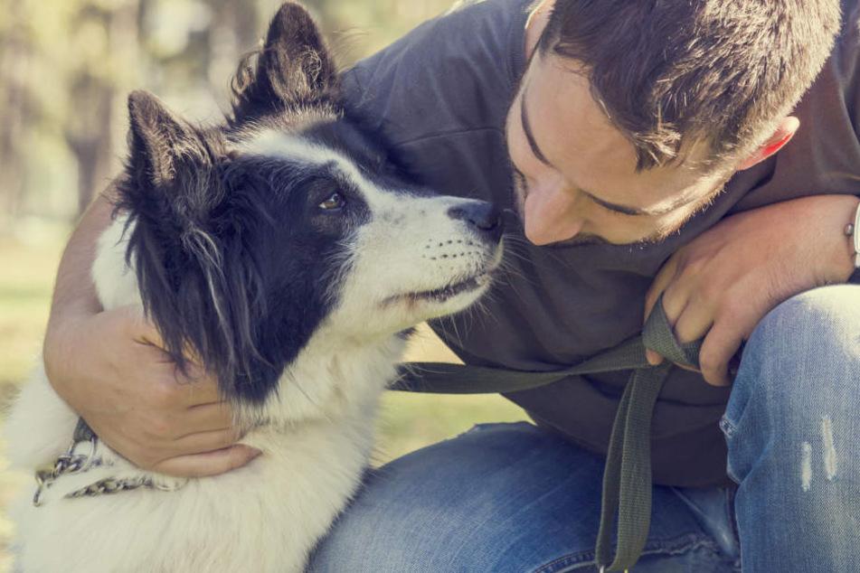 Beim Dogs Day gibt es was für Vier- und Zweibeiner.