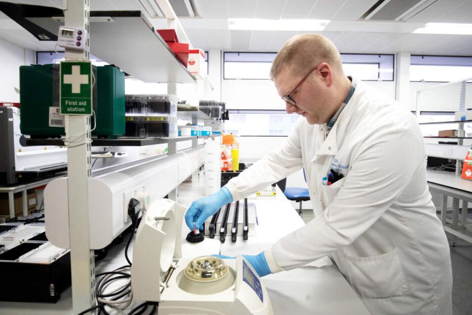 Im Labor wurden die Viren untersucht. (Symbolbild)
