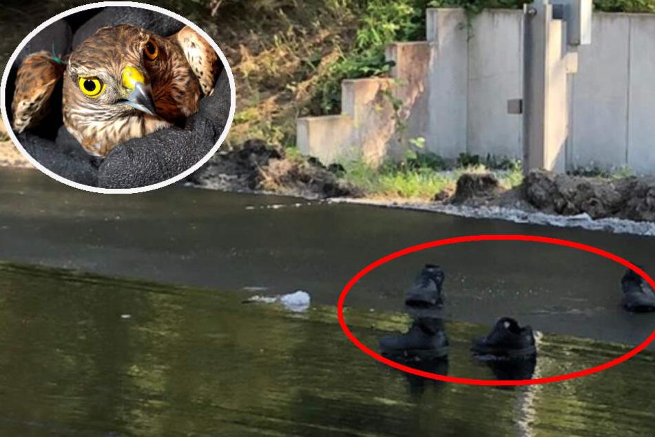 Die Polizisten konnten den Sperber (Symbolbild) zwar aus dem Teer befreien, das Tier starb aber kurze Zeit später.