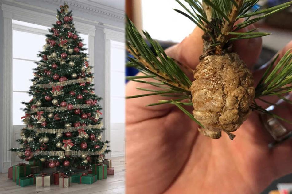 Oh Du Schreckliche: Frau macht Gruselfund in ihrem Weihnachtsbaum
