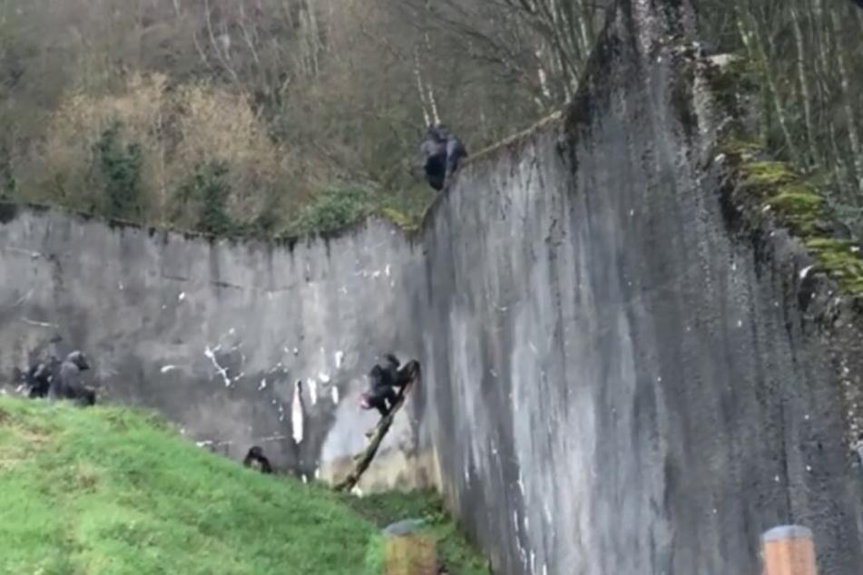 Der Plan, einen Weg in die Freiheit zu finden, war den Affen gelungen.