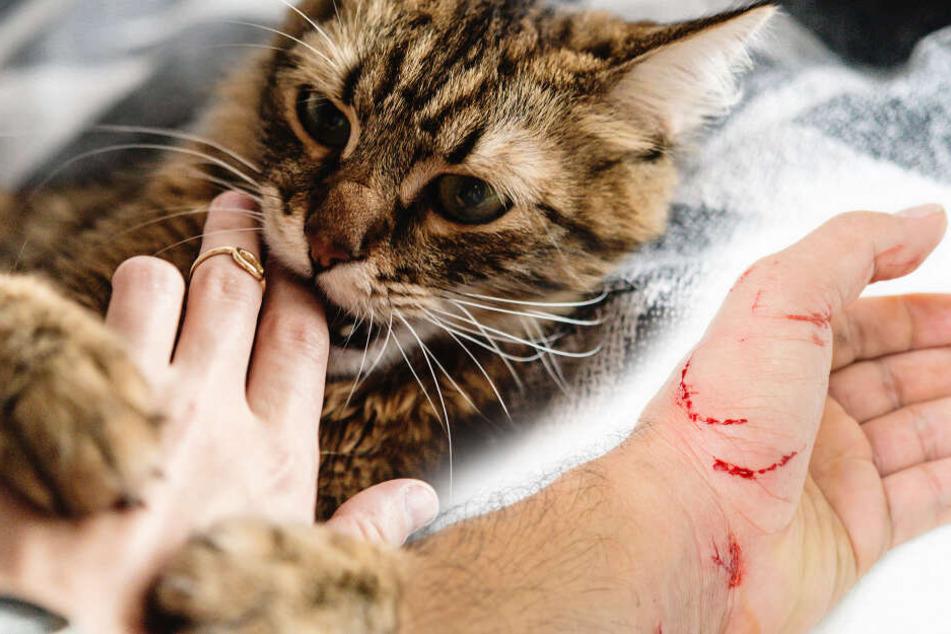 Wie gefährlich sind eigentlich Katzenbisse?
