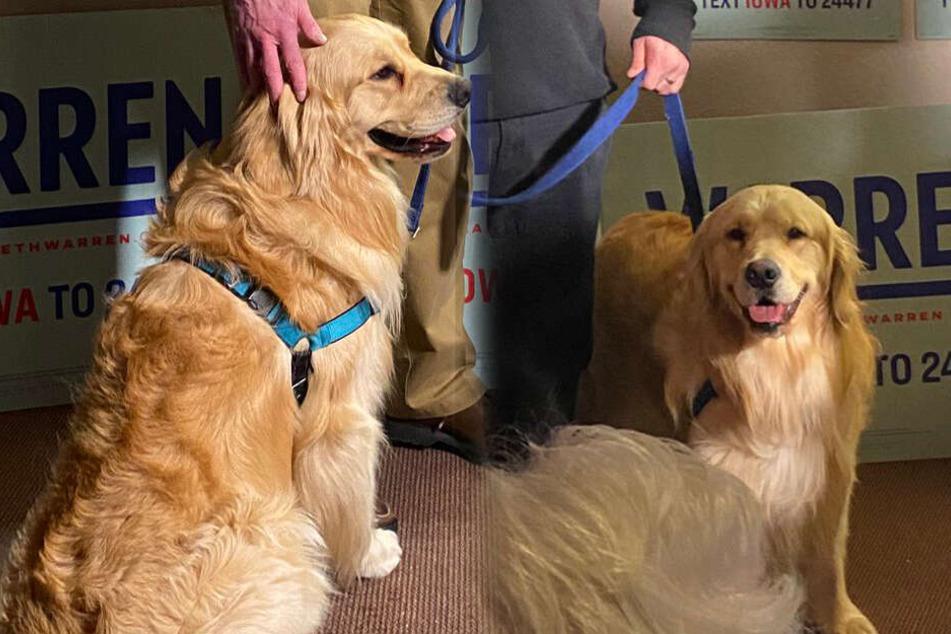 Hund als Wahlkampfhelfer: Dieser Vierbeiner sammelt Stimmen für Politikerin