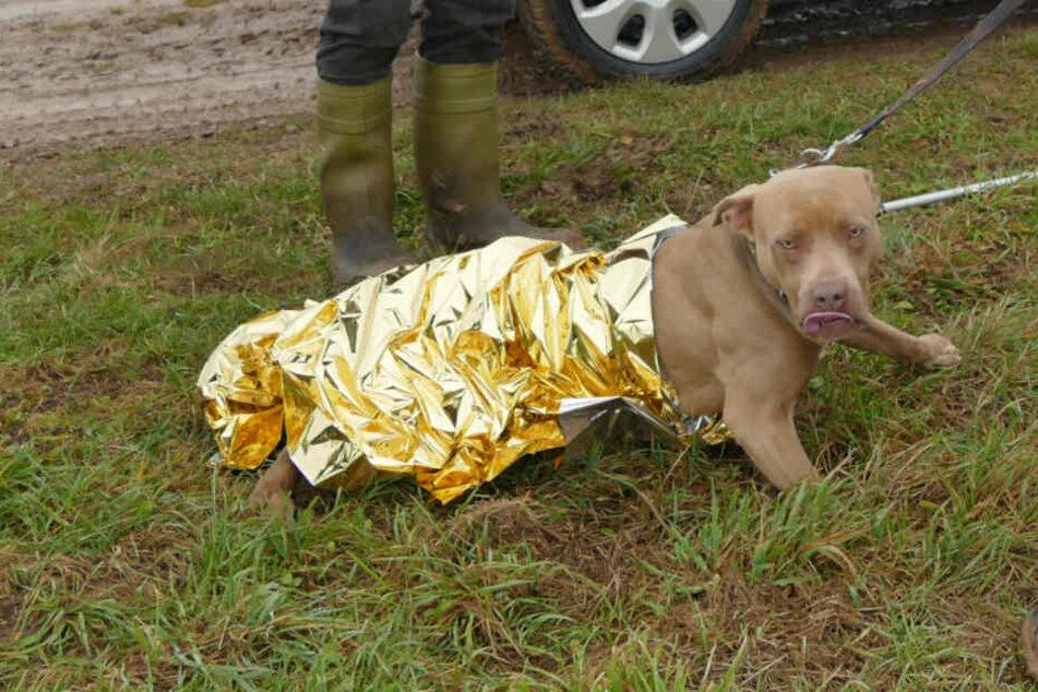 Ehepaar verliert Hund 300 Kilometer von zuhause entfernt, dann taucht er plötzlich wieder auf
